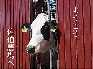 http://saeki-farm.sakura.ne.jp/00image/s16.jpg